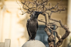 站立在一个雕象的乌鸦在公园 免版税库存图片