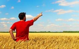 站立在一块麦田,拉扯的一个农夫人他的对天空的手指 您苹果仔细构成概念性控制食物绿色仪器评定的照片选择主题的重量 Copyspace 免版税库存图片