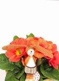 站立在一朵红色报春花前面的滑稽的复活节兔子 免版税图库摄影