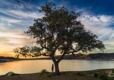 站立在一棵大树旁边的一个少妇看往湖 库存图片
