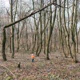 站立在一棵残破的树下的女孩 免版税库存照片