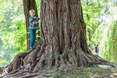 站立在一棵老树的一个大树桩的旁边小男孩 愉快的池氏 免版税库存照片