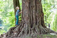 站立在一棵老树的一个大树桩的旁边小男孩 愉快的池氏 库存图片