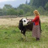 站立在一头母牛附近的村庄妇女在草甸 库存照片