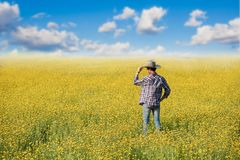 站立在与云彩和蓝天的花田的牛仔 免版税图库摄影