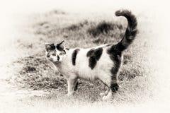 站立在与它的被上升的尾巴的草的一只逗人喜爱的猫 免版税库存照片