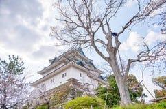 站立在与樱花的小山上面的和歌山城在foregound 免版税图库摄影