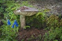 站立在与青苔和植物的蓝色花群的旁边伞菌蘑菇 免版税库存图片