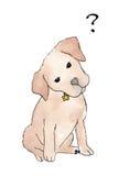 站立在与飞行的问号的白色背景的逗人喜爱的小狗上面 库存照片