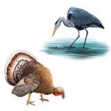 站立在与头的水狩猎的灰色苍鹭 免版税库存图片