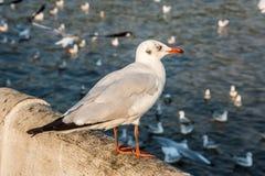 站立在具体杆的上面的海鸥在水中 库存图片