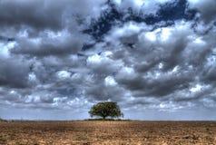 站立在冬天多云天空前面的一个领域中间的树 库存图片