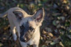 站立在叶子的一只无家可归的小狗的画象 免版税图库摄影