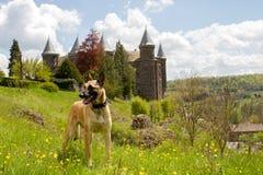 站立在城堡前面的狗 免版税库存照片