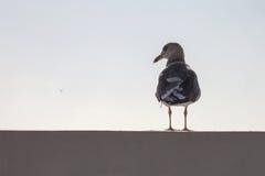 站立在壁画的海鸥 库存照片