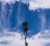 站立在天空的唯一树 库存照片
