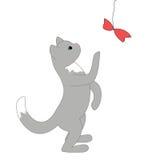 站立在它的后腿的小的灰色小猫 图库摄影