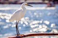 站立在小船栏杆的白鹭 库存图片