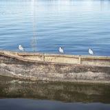 站立在小船的海鸥 免版税库存图片