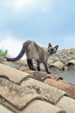 站立在屋顶的猫 图库摄影