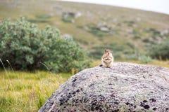 站立在山和领域的岩石的逗人喜爱的土拨鼠 免版税图库摄影
