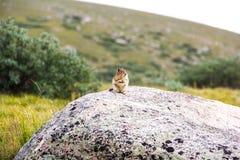 站立在山和领域的岩石的逗人喜爱的土拨鼠 库存图片