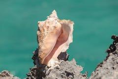站立在岩石峭壁边缘的海壳特写镜头视图 免版税图库摄影