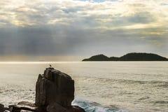 站立在岩石的海鸥捉住他的早晨sunbath 免版税图库摄影