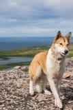 站立在岩石的狗 免版税图库摄影