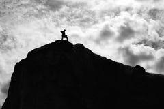 站立在岩石边缘的年轻商人  免版税库存照片