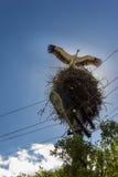 站立在巢的白色鹳 免版税库存照片