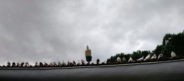 站立在房檐的鸽子行  免版税图库摄影