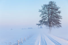站立在报道的领域之间的路旁边的一棵偏僻的树 免版税库存照片