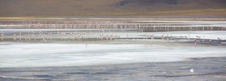 站立在拉古纳Colorada,玻利维亚的小组火鸟 免版税库存照片