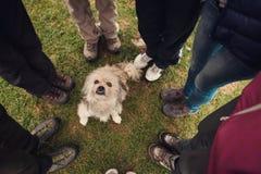 站立在无家可归的狗附近的人们 库存图片