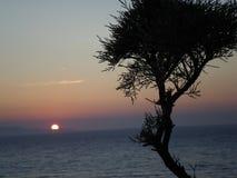 站立在日落对面的树 库存照片