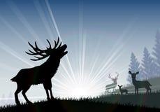 站立在早晨的时期的家庭鹿的剪影 图库摄影