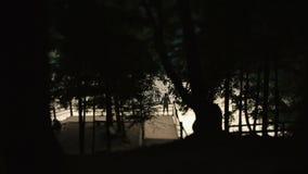 站立在有日落的一个码头和在前景的树枝样式的人偏僻的剪影 股票视频