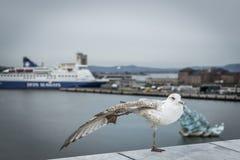 站立在有港口的一条腿的海鸥的特写镜头在背景中 免版税图库摄影
