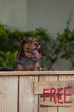 站立在有自由标志的报亭后的狗 免版税库存图片