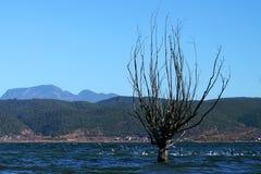 站立在有鸟的湖的冬天树 免版税库存照片