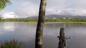 站立在木日志的海鸥飞行在池塘水 影视素材