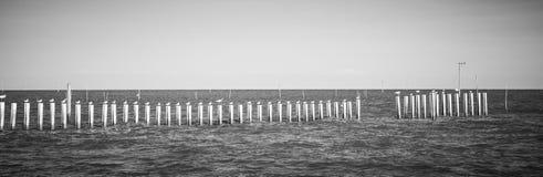 站立在杆的海鸥在轰隆Khun Thian海 库存照片