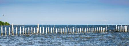 站立在杆的海鸥在轰隆Khun Thian海 免版税库存照片