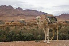 站立在村庄视图前面的骆驼 免版税库存照片