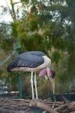 站立在棍子的鸟 免版税图库摄影