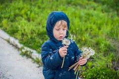 站立在森林领域草甸的一个逗人喜爱的滑稽的小男孩小孩的画象用蒲公英在手和吹上开花他们 库存照片