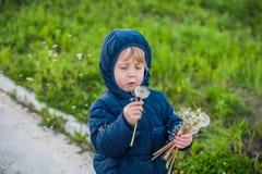 站立在森林领域草甸的一个逗人喜爱的滑稽的小男孩小孩的画象用蒲公英在手和吹上开花他们 图库摄影