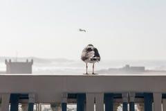 站立在楼梯栏杆的海鸥观看在海 图库摄影