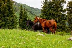 站立在沼地的两匹马 免版税库存照片